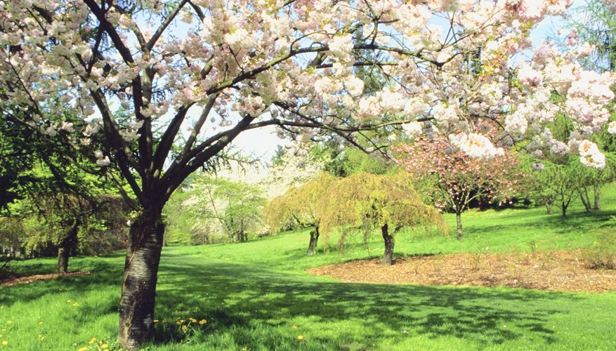 Fruit trees benefit the most from fertilization.