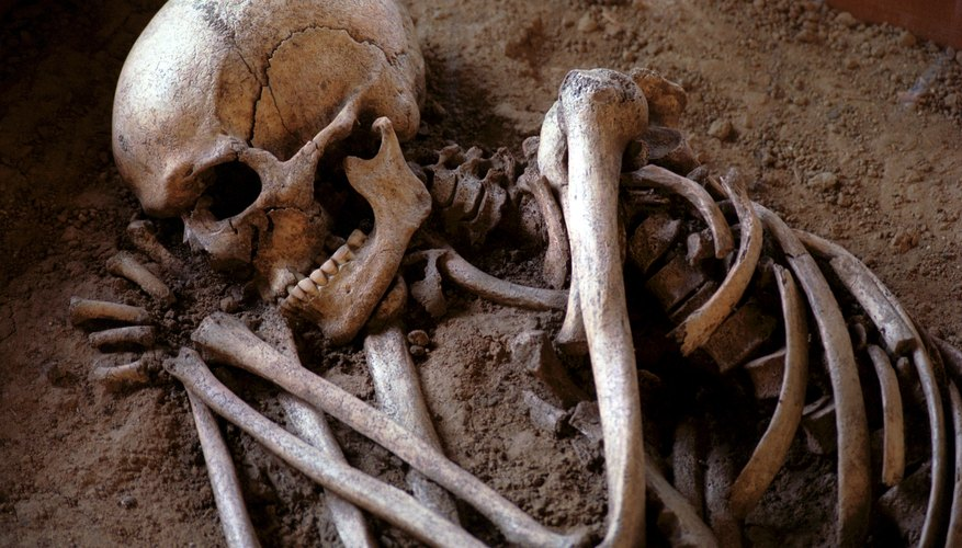 comparison of a human & cat skeleton | sciencing, Skeleton