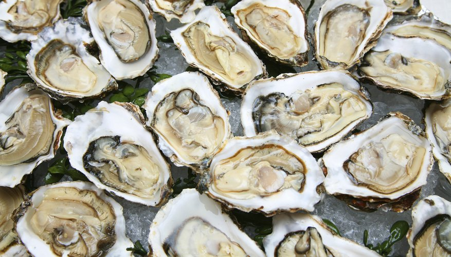 Oysters have an unusual reproduction process.
