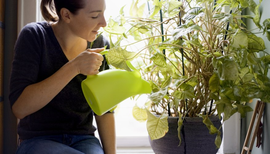 how to make plants grow faster