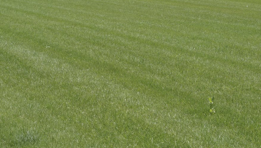 A good-looking lawn requires on a well-maintained mower deck.