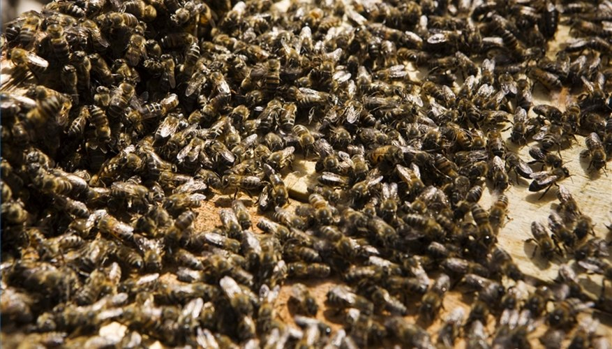 Get Rid of a Beehive