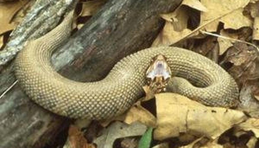 Reptiles That Lay Eggs How Do Snakes Lay Eggs...