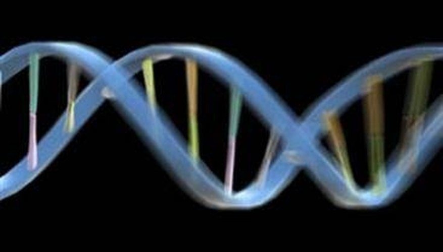 What Are the Four Nitrogenous Bases of DNA?