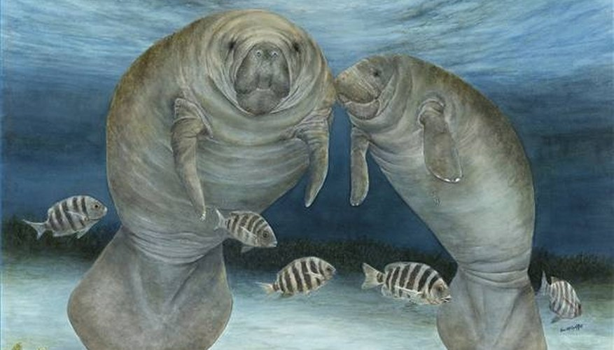 Where do manatees live in the ocean