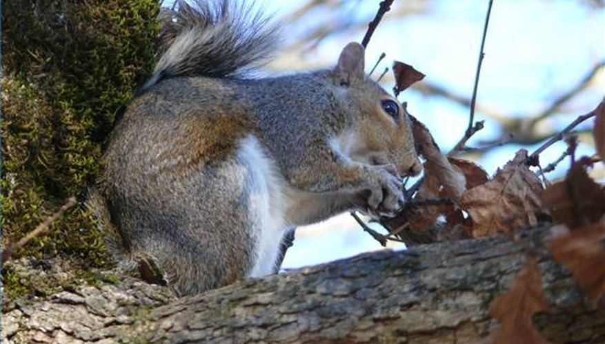 How To Use Pepper For Squirrel Repellent Sciencing