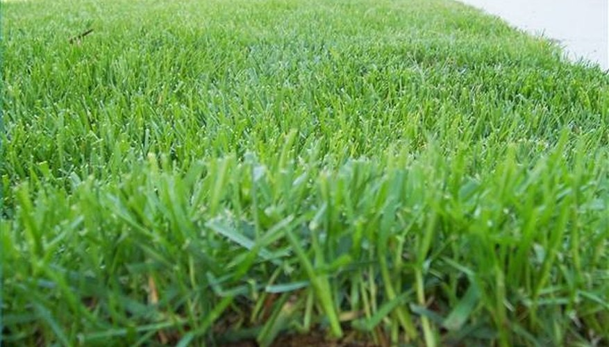 Mulched grass contains large quantities of nitrogen for good top growth.