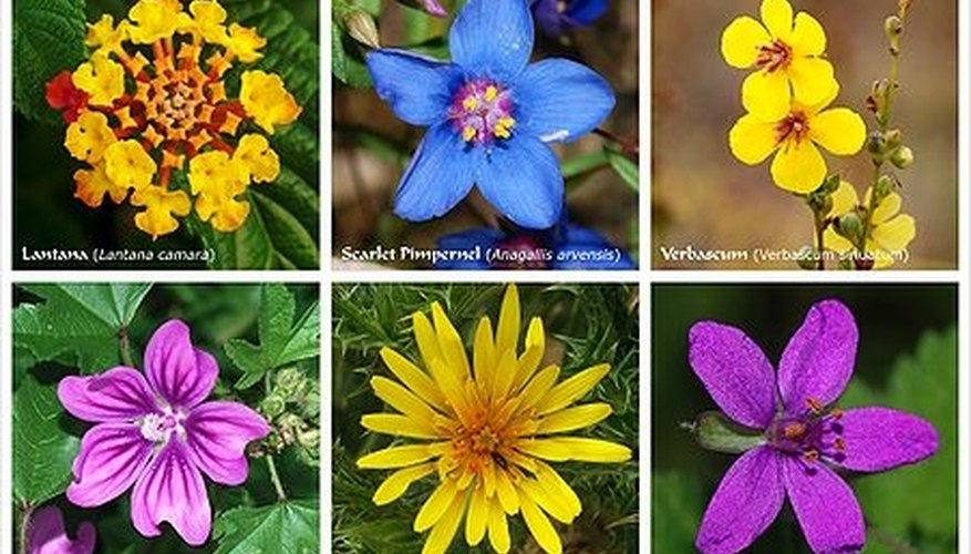Variety of Flowers. Photo: Wikimedia Commons