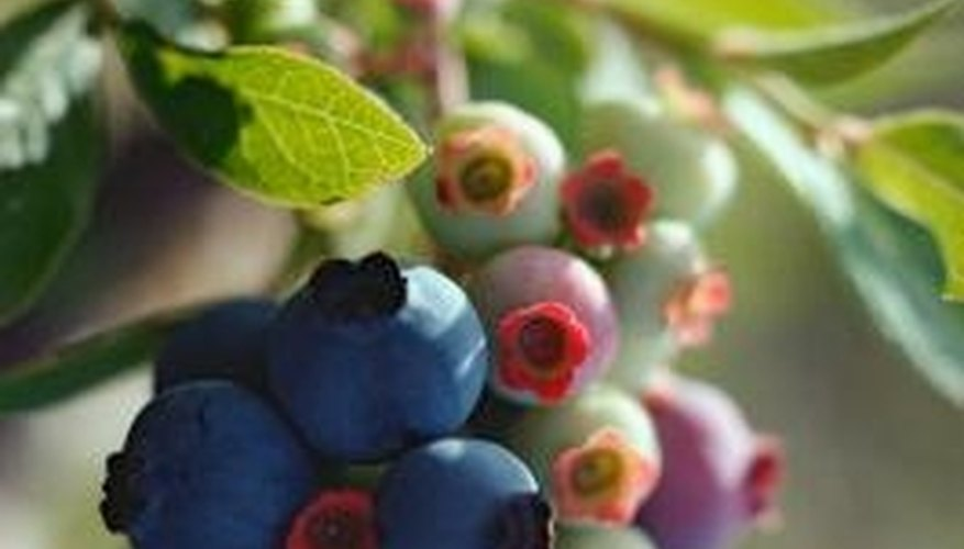 Blueberries also top the frequently damaged list.