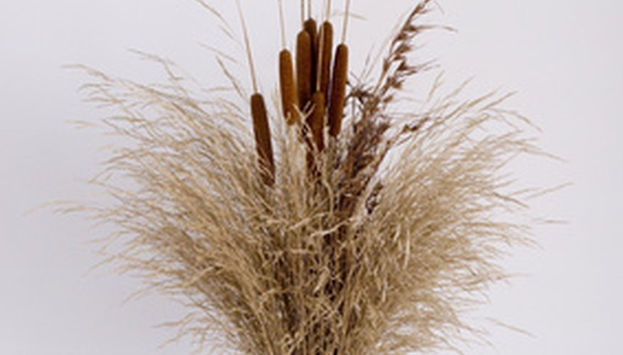 Cattails are used in floral decorations.