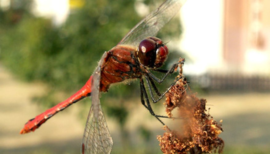 Dragonflies make stunning decorations and conversation starters.