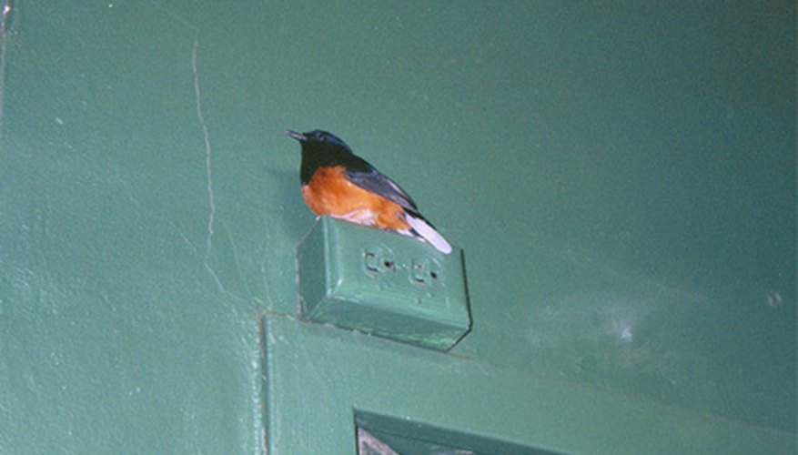Orioles are a favorite among bird watchers.
