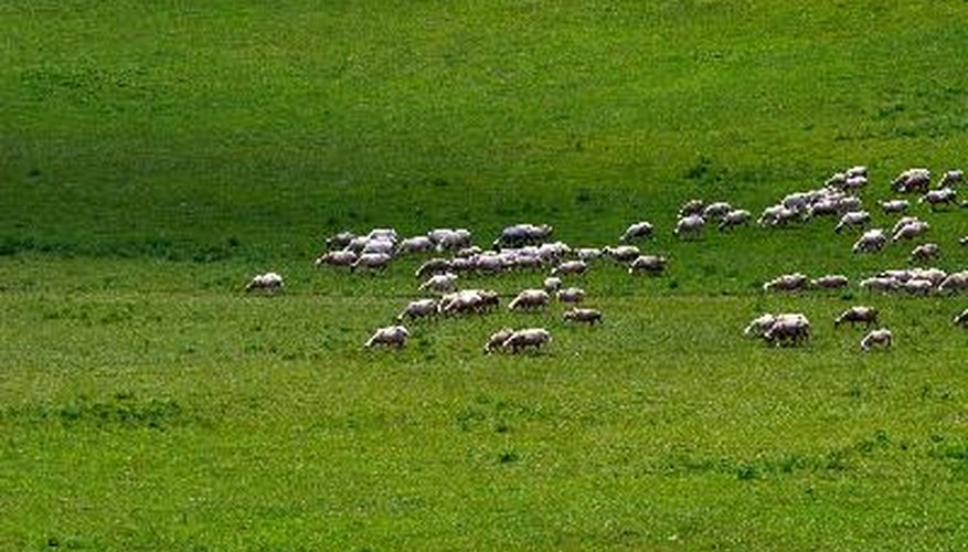 Grassland Ecosystem Pictures 78