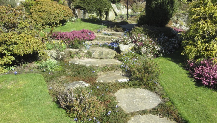 A range of ground cover plants look interesting between stepping stones.