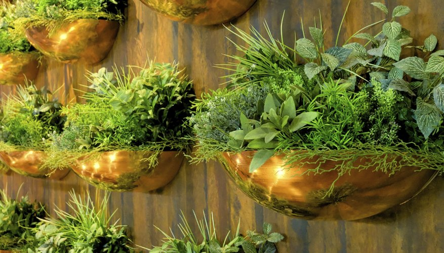 Fresh herbs can grow in a vertical wall garden.