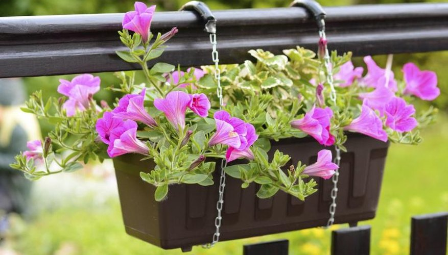 A small hanging basket with petunias.