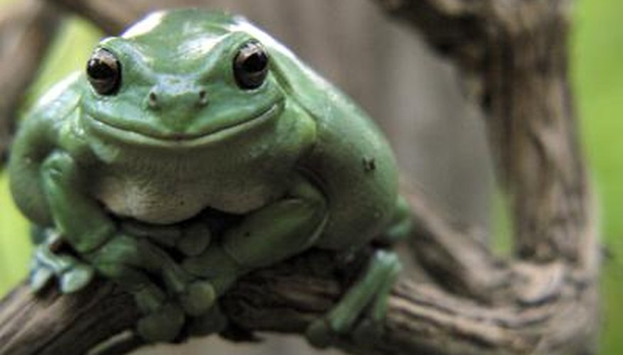 Frogs do not have ribs or a diaphragm.