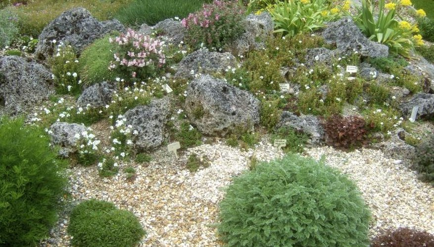 An alpine garden with rock mulch.