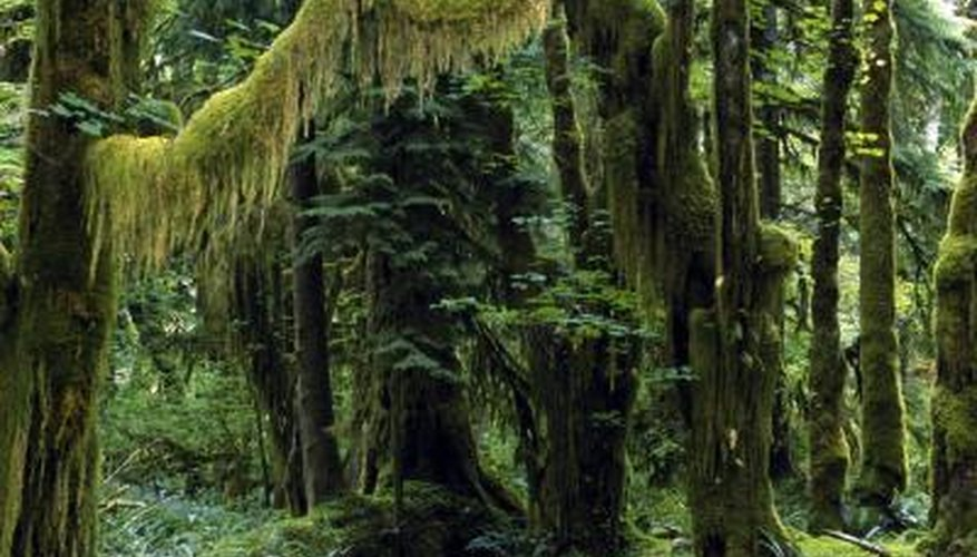 What Is the Average Rainfall in a Rainforest?   Sciencing