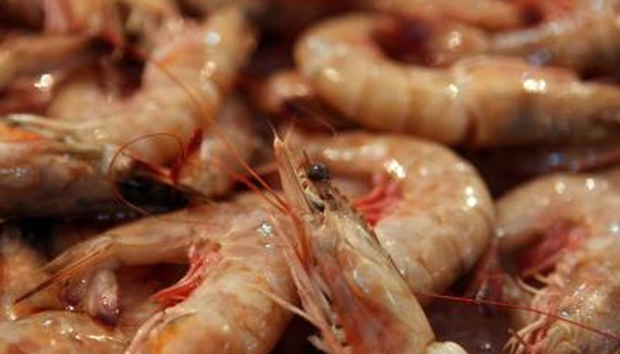 Purchase juvenile shrimp from a hatchery