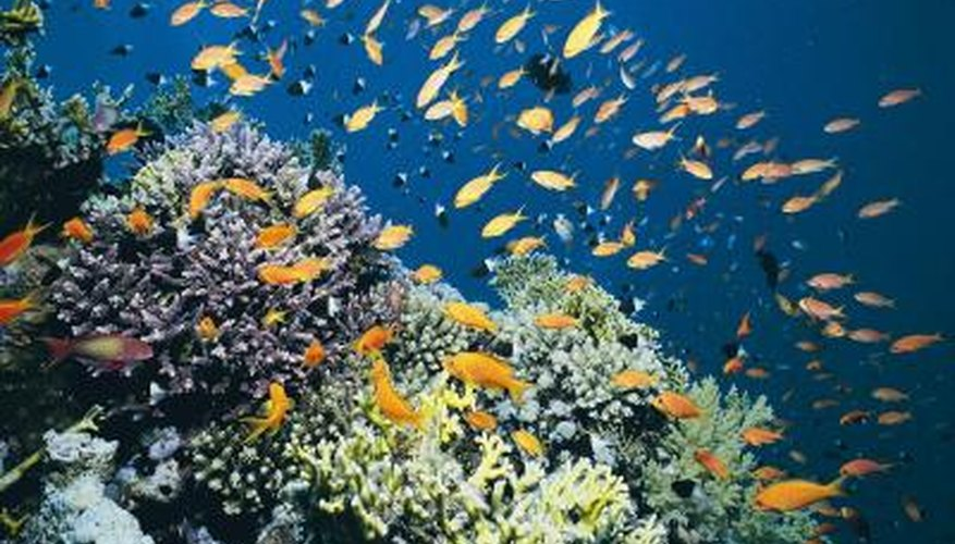 A coral reef is an example of an ecosystem.