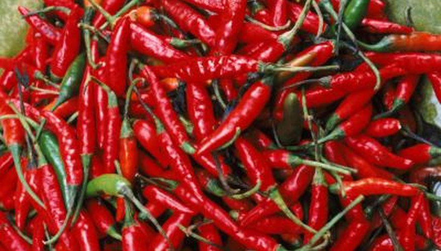 Chili peppers add fat-killing power as well as spicy flavor to foods.