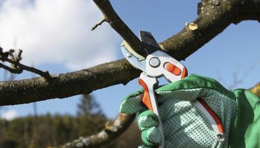 The average cost of cutting a tree ranges from $75-$1,000 or more.