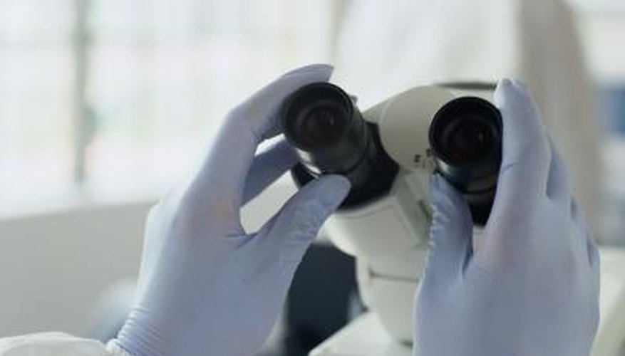 Microscope nosepiece which holds the objective lenses