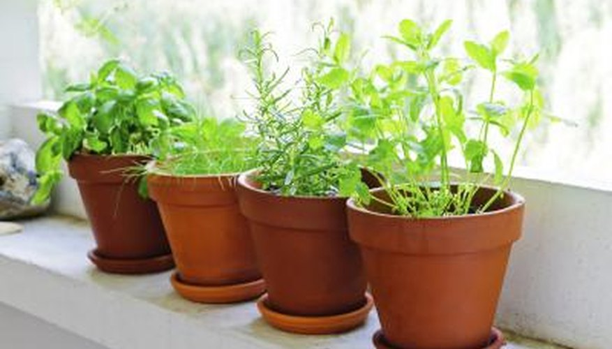 A window sill with potted herbs.