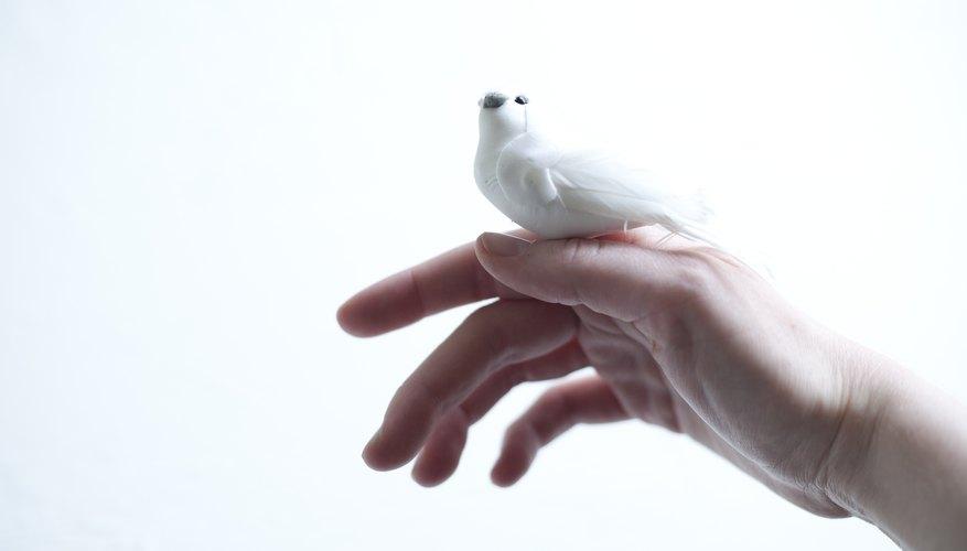 Paloma de luto