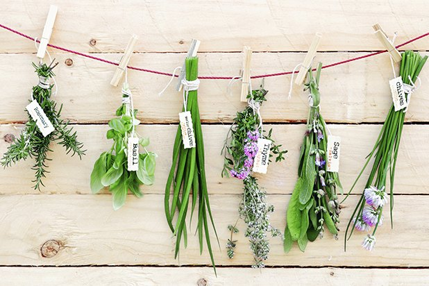 Your favorite herbs belong to two basic groups, the mint family and the carrot family.