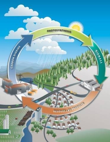 How Does Biomass Work?