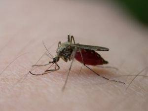 Why Are Mosquitoes Attracted to Certain People?