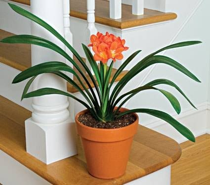 How to identify green house plants with pictures ehow - Green house plants names ...