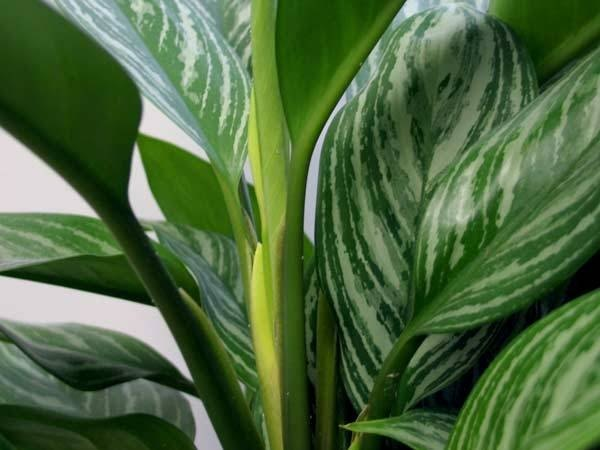 How to identify green house plants with pictures ehow - House plant identification guide by picture ...