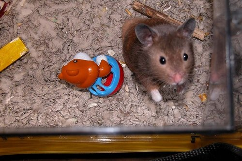 How to make a homemade hamster cage ehow for How to make a diy hamster cage