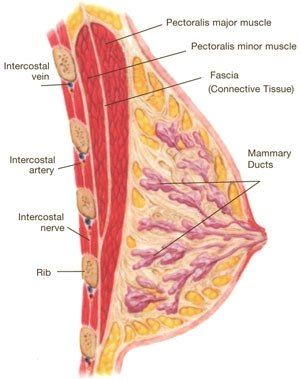 Parts of the Breast