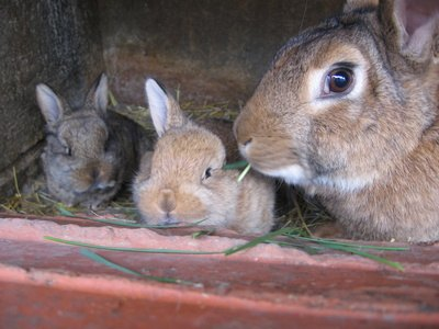 Mothers rabbits rarely abandon their young.