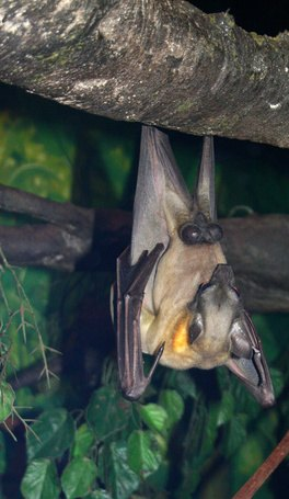 Don't be afraid! We need bats to help protect our natural world.