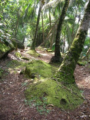 Asian Rainforest Facts 66