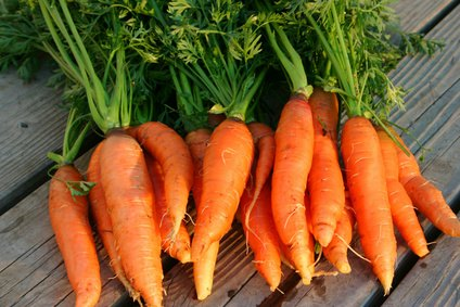 Carrot seed oil is a useful antifungal and antiseptic agent.