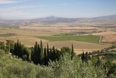 Cypresses in country side