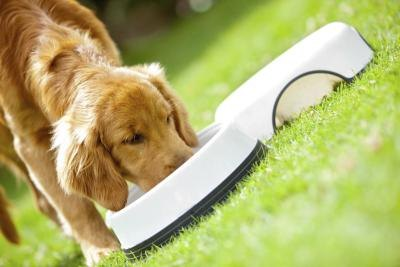 Food allergies are common in dogs.