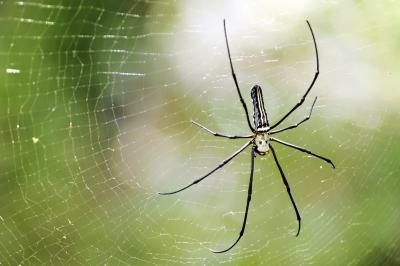 A spider spins a web in the rainforest.