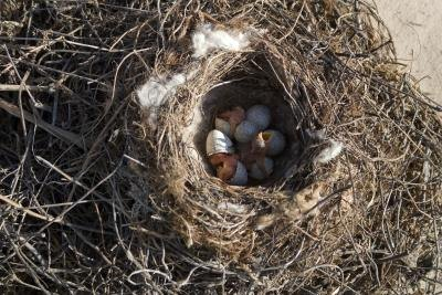 A high-angle view of a nest with baby birds in it.
