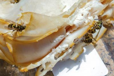 Yellow jackets attacking a ham sandwich