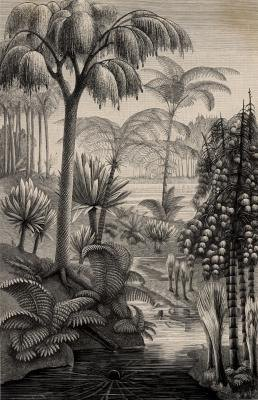 Gymnosperms dominated the world millions of years ago.