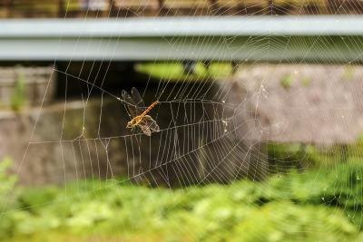 An insect is trapped in a spider web in the window.