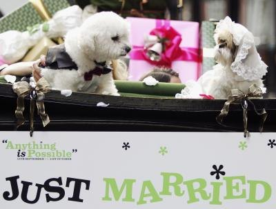 Doggy weddings and other frivolities are okay if being a dog is also allowed.