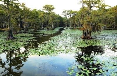 Learning About Louisiana - Wetlands - Jean Lafitte National ...